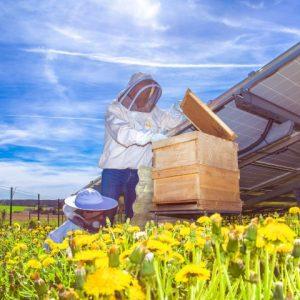 Rudolf Tranziska - apicoltore amatoriale di IBC SOLAR